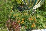 Ausschnitt vom Hanggarten der Villa Aurelia in les Issambres, Südfrankreich, nah am Meer